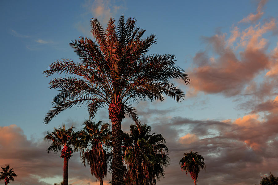 Arizona sky by Pamela S Eaton-Ford