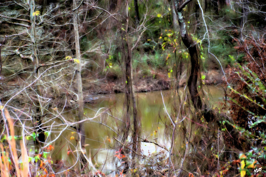 Arkansas bayou photograph by gina obrien bayou photograph arkansas bayou by gina obrien freerunsca Gallery