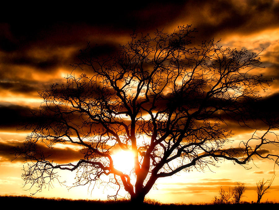 Sunset Photograph - Arms Wide Open by Karen M Scovill