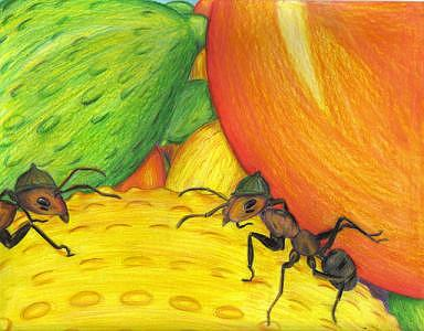 Ants Drawing - Army Ants by Tiffany Everett