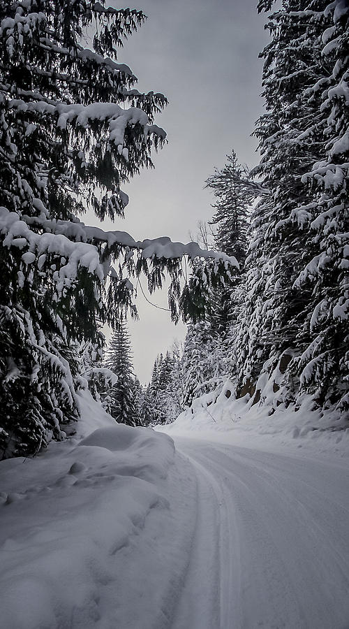 Winter Photograph - Around The Bend by Albert Seger