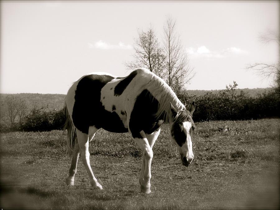 Horse Photograph - Around The Pasture by Debra     Vatalaro
