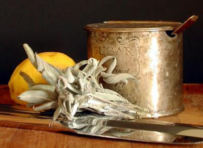 Sage Painting - Arrangement In Silver by Randy Ford