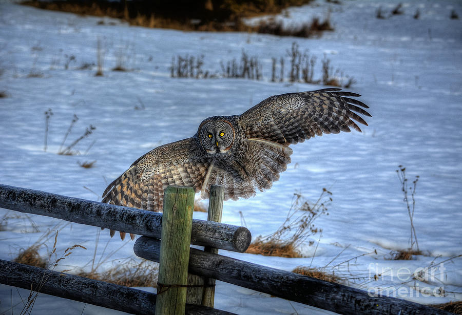 Owl Photograph - Arrival by Skye Ryan-Evans