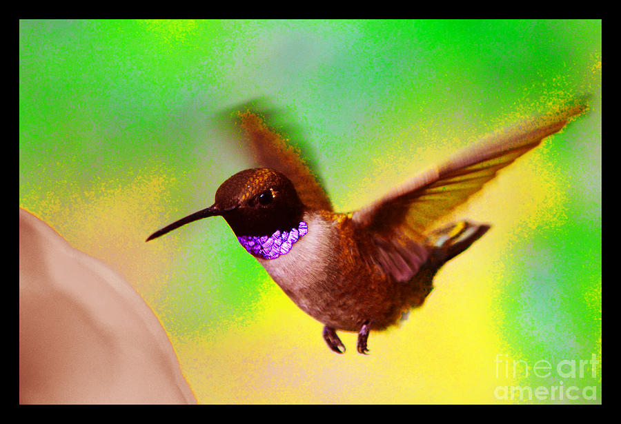 Hummingbird Photograph - Arrival by Susanne Still