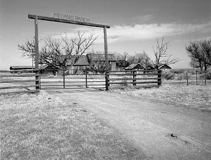 Ranch Photograph - Arriving Home by Allan McConnell