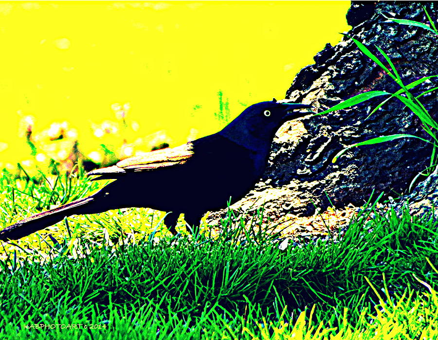 Bird Photograph - Art Deco Grackle by Kathy Barney