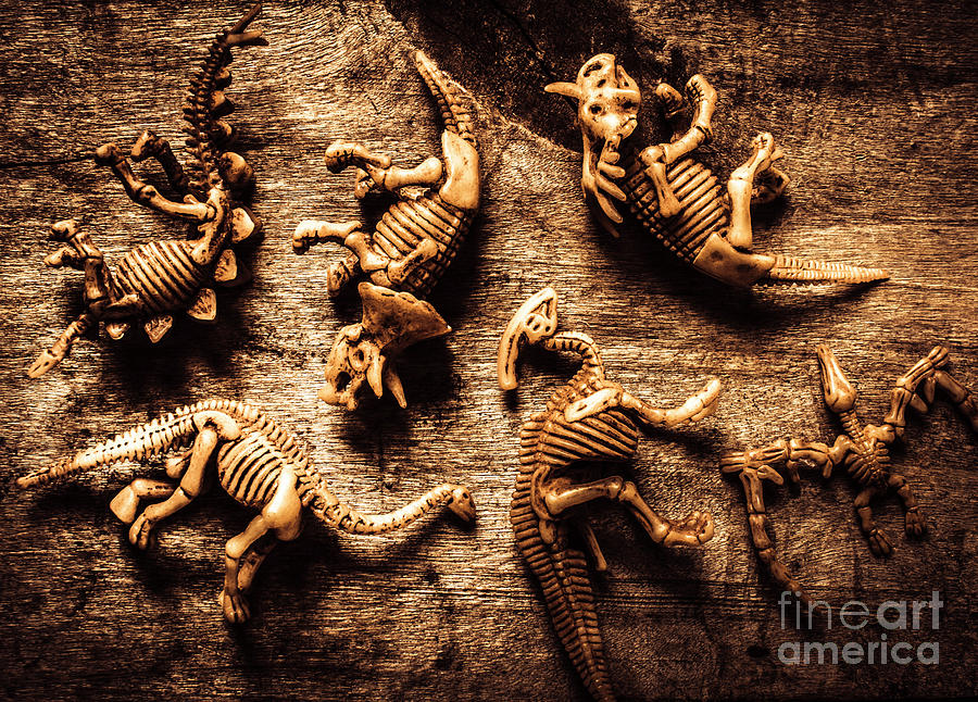 Display Photograph - Art In Palaeontology by Jorgo Photography - Wall Art Gallery