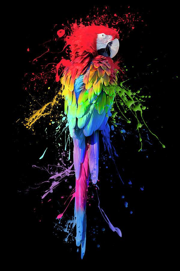 Parrot Photograph - Art Interrupted by Janet Fikar