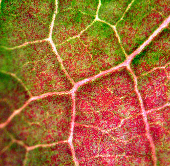 Red And Green Photograph - Arteria - On The Road Again by Danielle  Plante