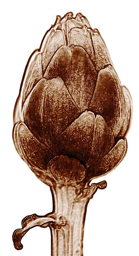 Artichoke Painting - Artichoke by Frank Tschakert