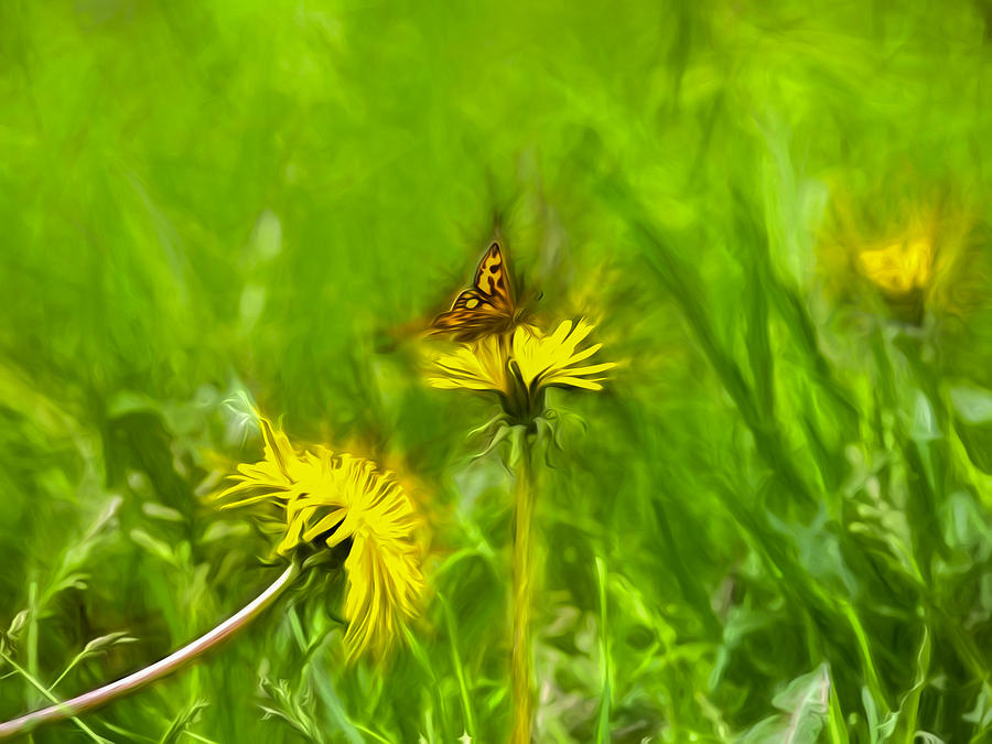 Artistic Photograph - Artistic Painterly Butterfly 1 On Dandelion by Leif Sohlman