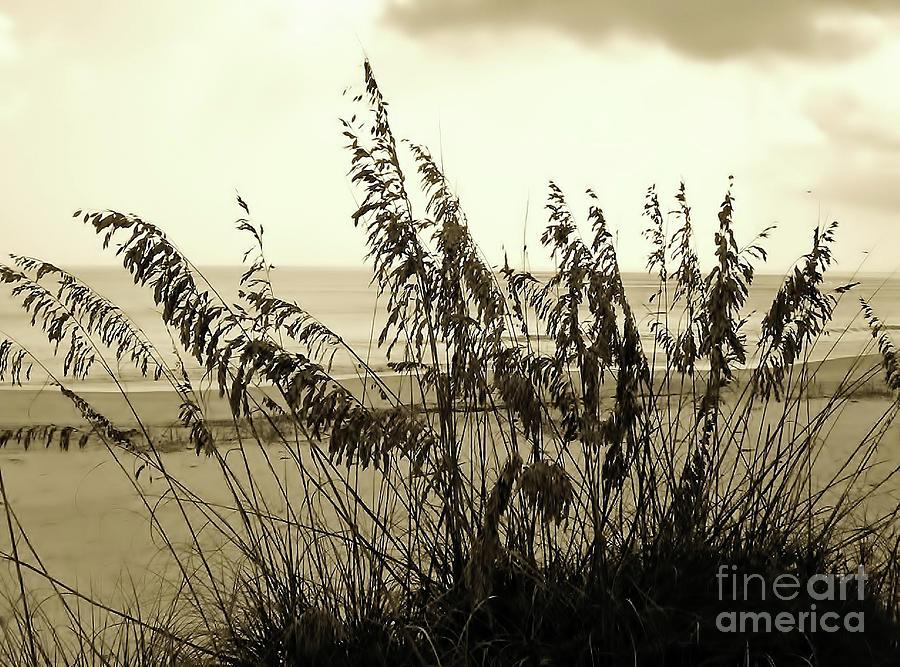Sepia Photograph - Artistic - Sea - Oats by D Hackett