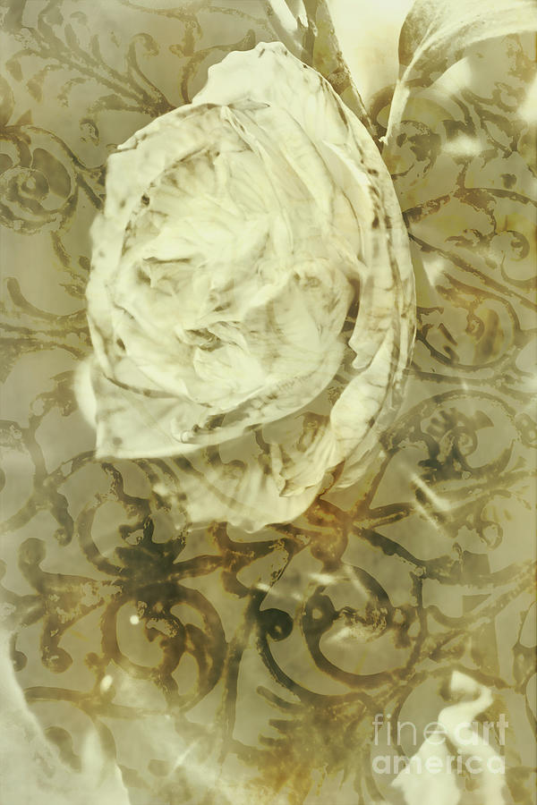 Artwork Photograph - Artistic Vintage Floral Art With Double Overlay by Jorgo Photography - Wall Art Gallery
