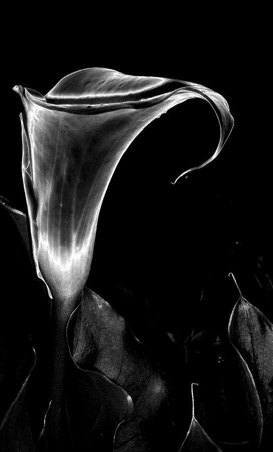 Black Photograph - Arum by Vah Pall