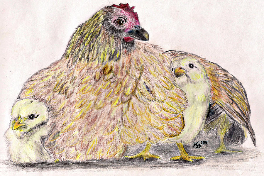 Chickens Drawing - As A Hen Gathereth Her Chickens Under Her Wings by Marqueta Graham