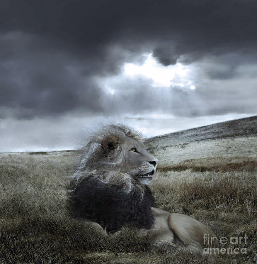 Lion Digital Art - As Darkness Fades by Lynn Jackson