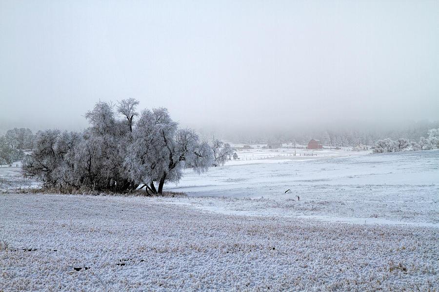 As the Fog Settles Photograph by Alana Thrower