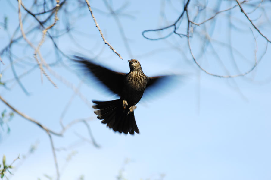 Bird Photograph - Ascension by Donna Blackhall