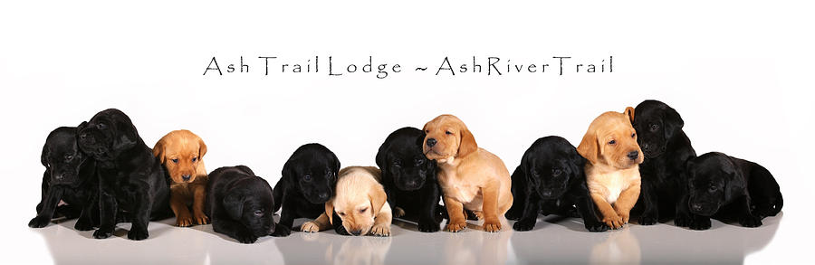 Ash Trail Lodge Photograph - Ash Trail Lodge Pups by Pam Gabriel