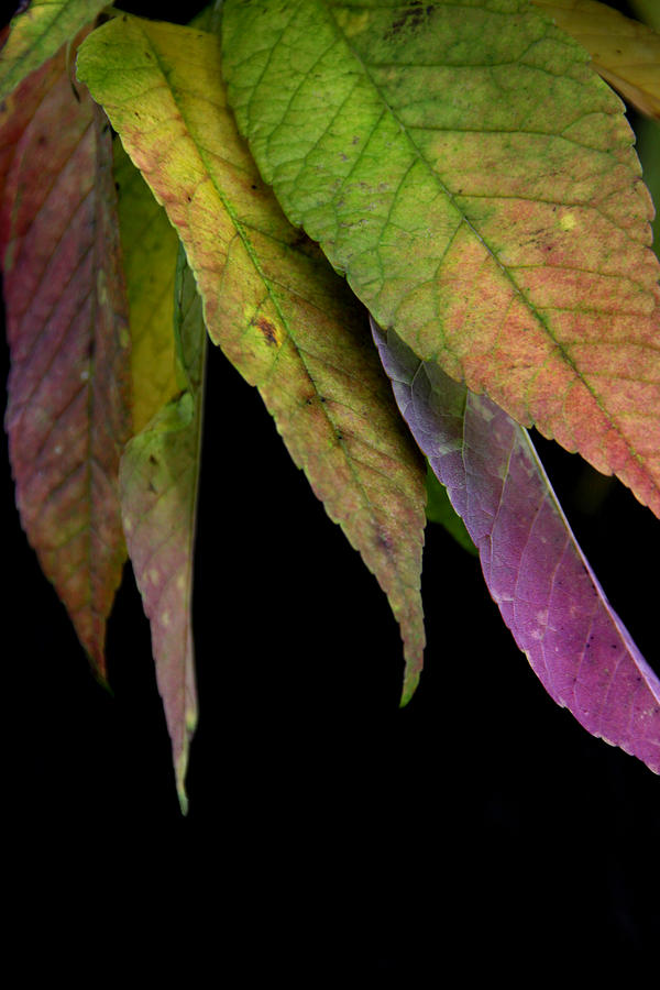 Autumn Photograph - Ashes To Ashes by Linda Merkel