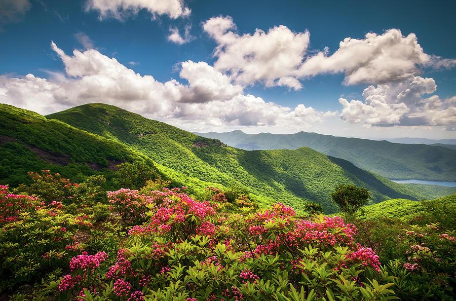 Asheville Photograph - Asheville Nc Blue Ridge Parkway Spring Flowers Scenic Landscape by Dave Allen