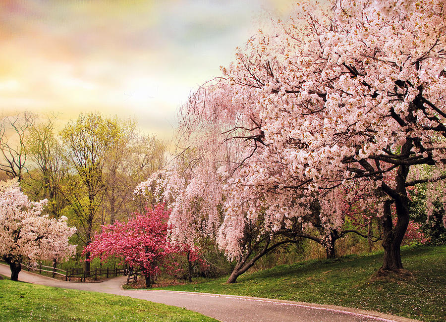 Nature Photograph - Asian Cherry Grove by Jessica Jenney