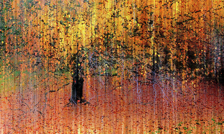 Autumn Photograph - Asian Impressions by Jessica Jenney