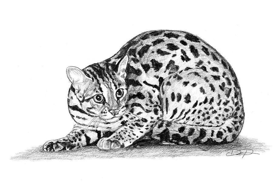 бенгальский кот картинки раскраски текущем году