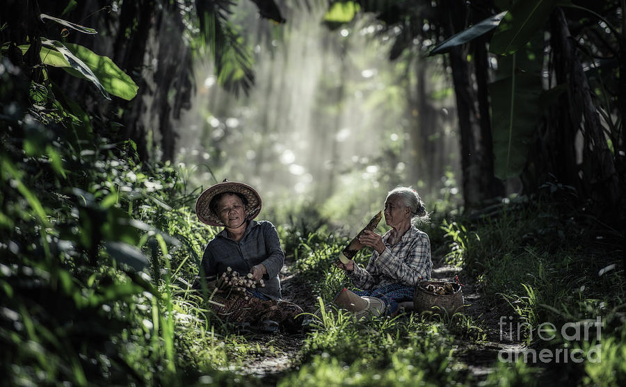 Thai Photograph - Asian old woman working in the rain-forest by Sasin Tipchai