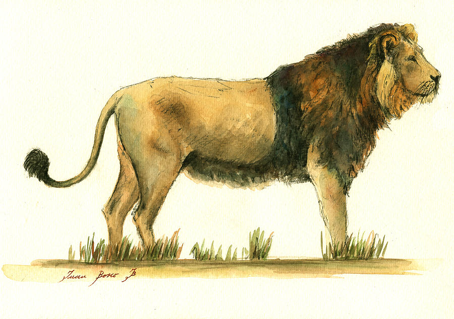 Art & Collectibles Painting - Asiatic lion by Juan Bosco