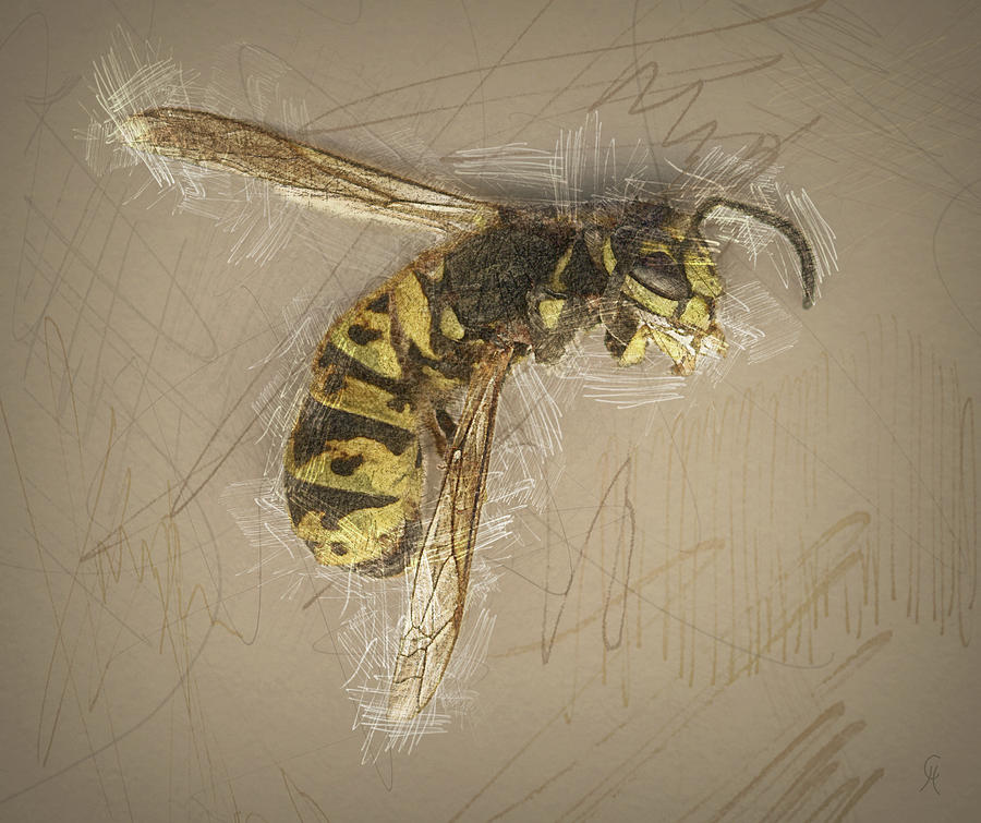 Wasp Digital Art - Asleep In The Garden by Carmen Hathaway
