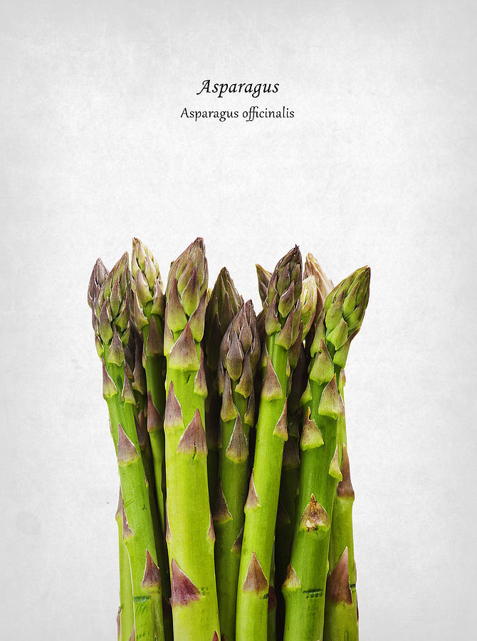 Asparagus Photograph - Asparagus by Mark Rogan