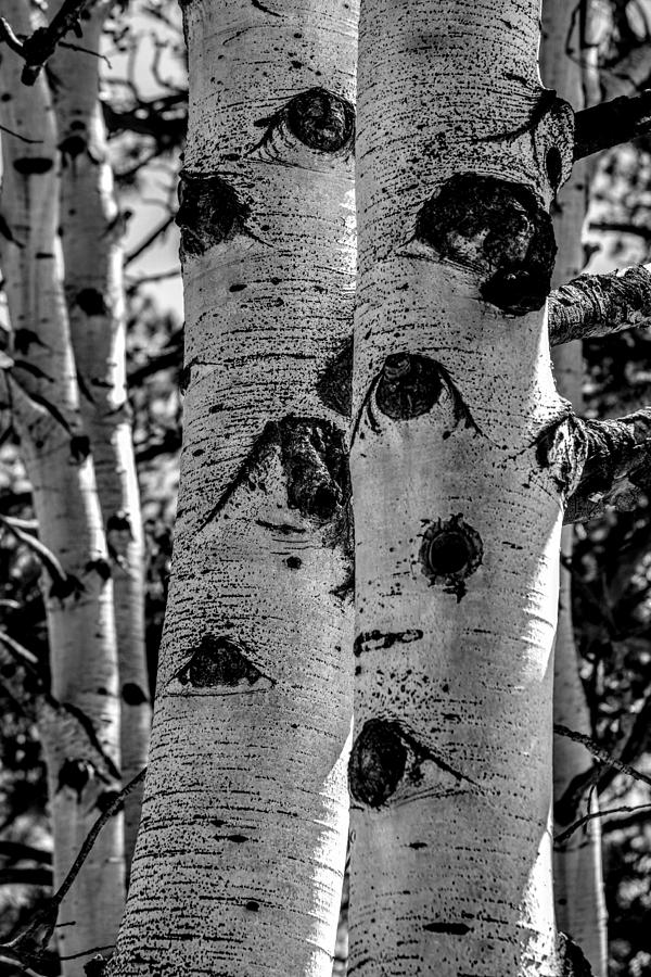 Aspen Bark by Michael Brungardt