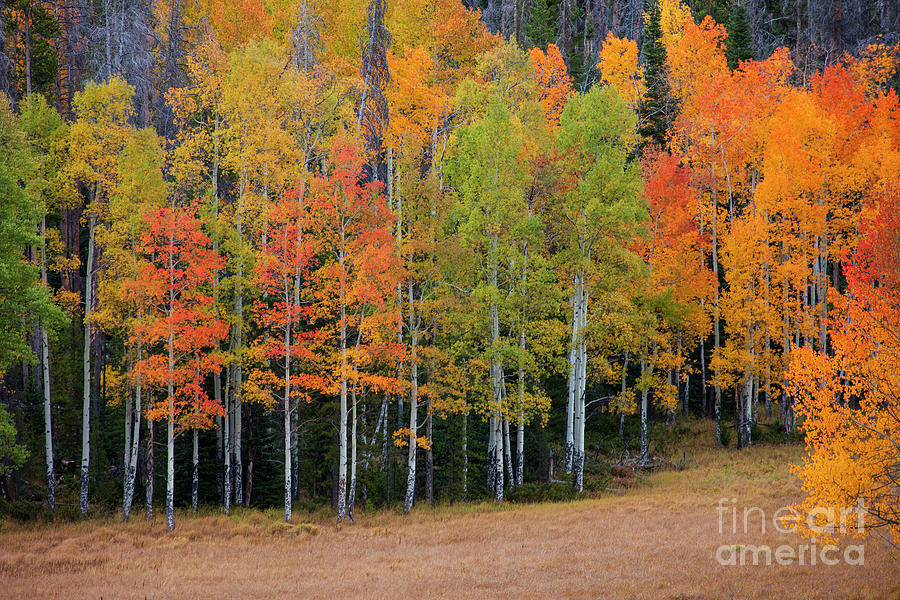 Aspen Color by Timothy Johnson