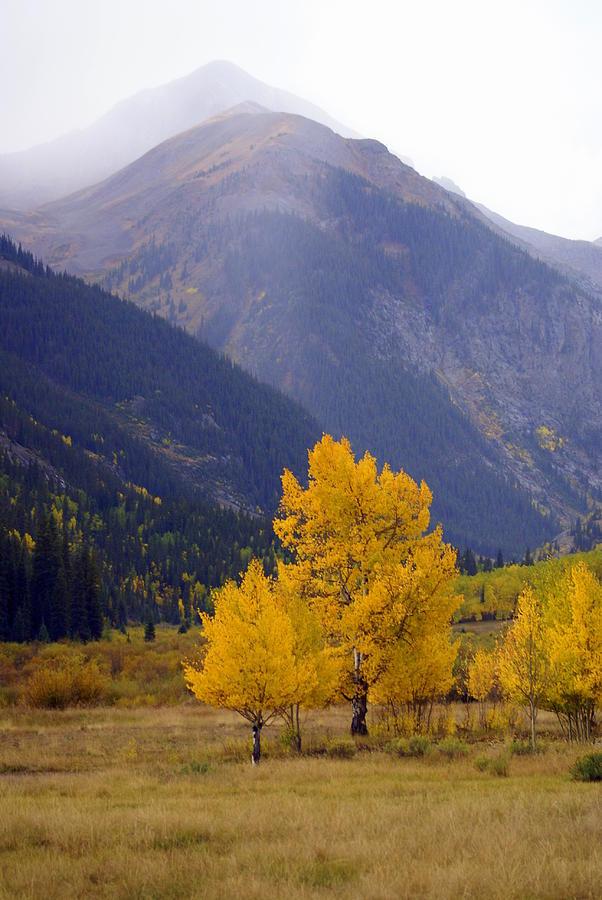 Fall Colors Photograph - Aspen Fall 4 by Marty Koch
