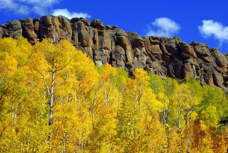 Fall Colors Photograph - Aspen Glory by Marty Koch