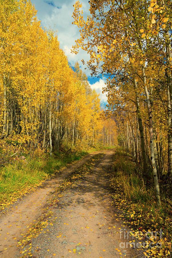 Aspen Photograph - Aspen Lane by Mike Dawson