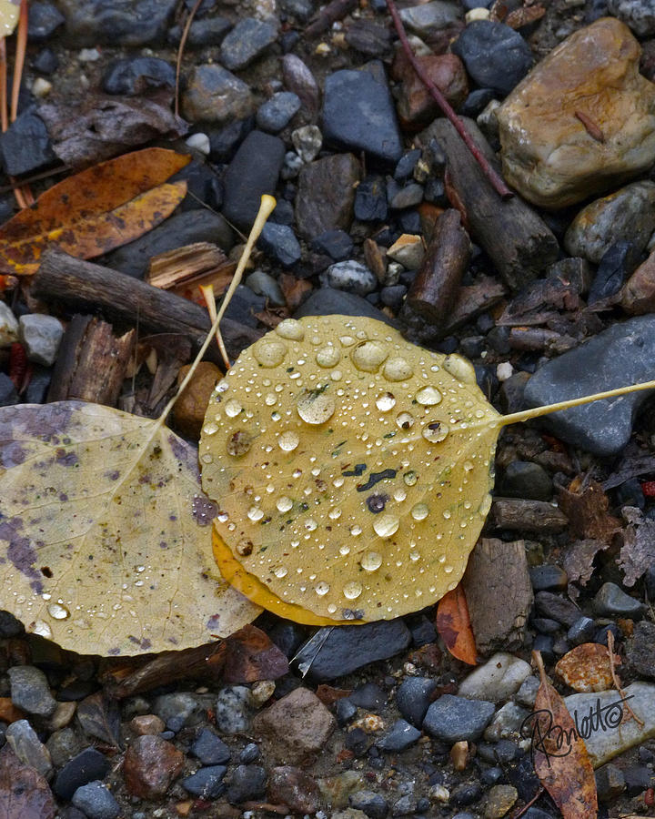 Aspen Leaf by Ann Ranlett