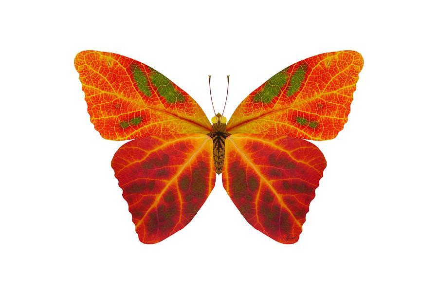 Butterfly Digital Art - Aspen Leaf Butterfly 2 by Agustin Goba