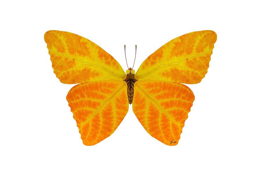 Butterfly Digital Art - Aspen Leaf Butterfly 3 by Agustin Goba