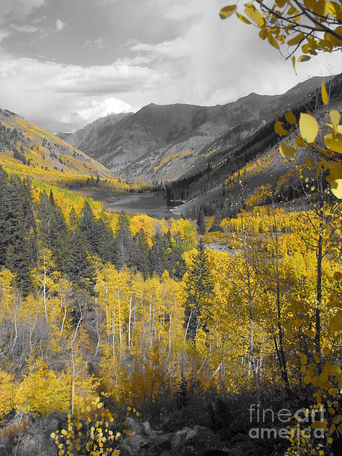 Aspens Photograph - Aspen Valley In Fall by Jeff White