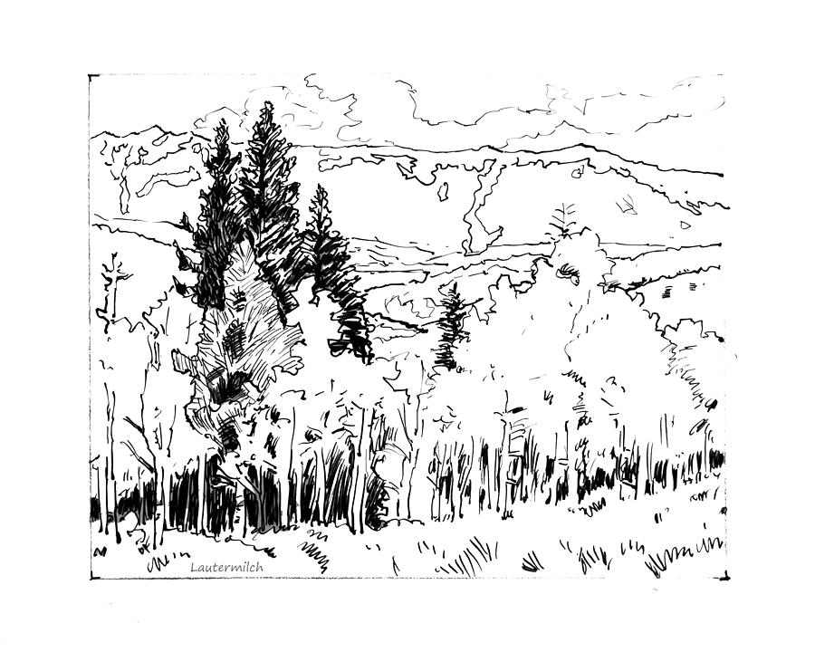 Aspens Drawing - Aspens Against the Evergreens by John Lautermilch