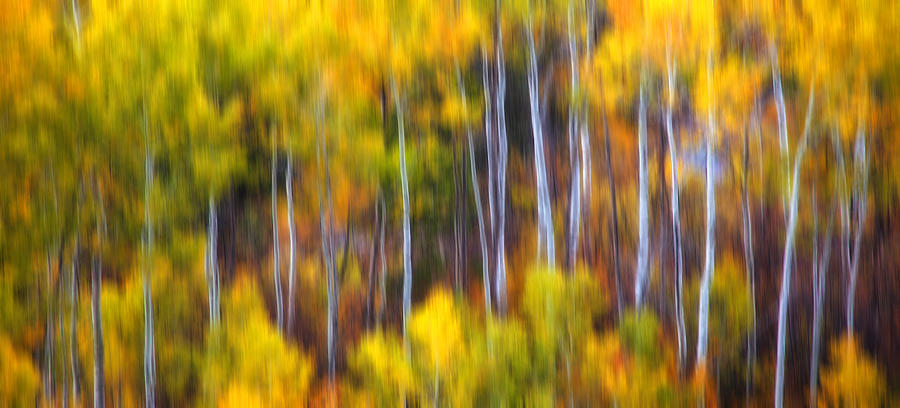 Trees Photograph - Aspens Alive by Darren  White