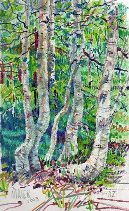 Aspens Drawing - Aspens by Donald Maier