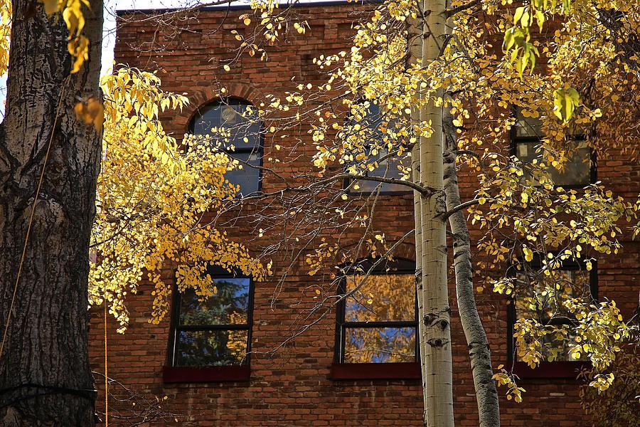 Autumn Aspens in Aspen, CO by Donna Quante