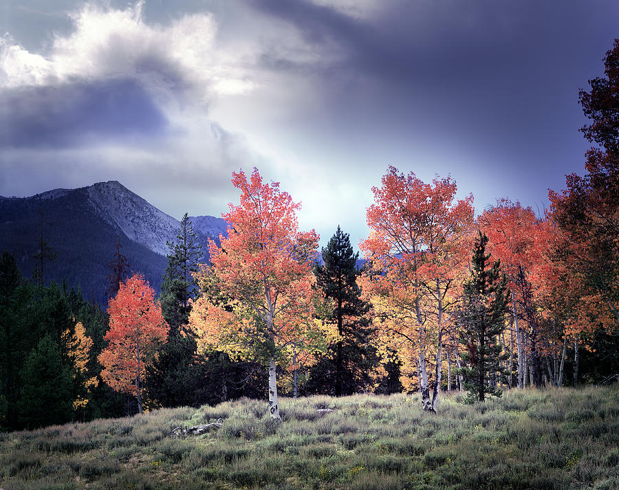 Sawtooths Photograph - Aspens In Autumn Light by Leland D Howard