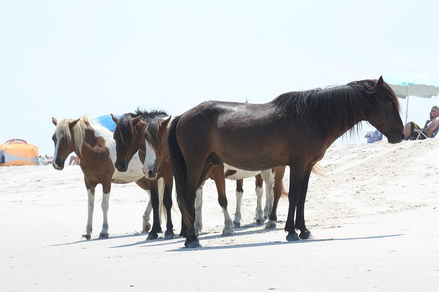 Horses Photograph - Assateague Beach Ponies by JB Stran