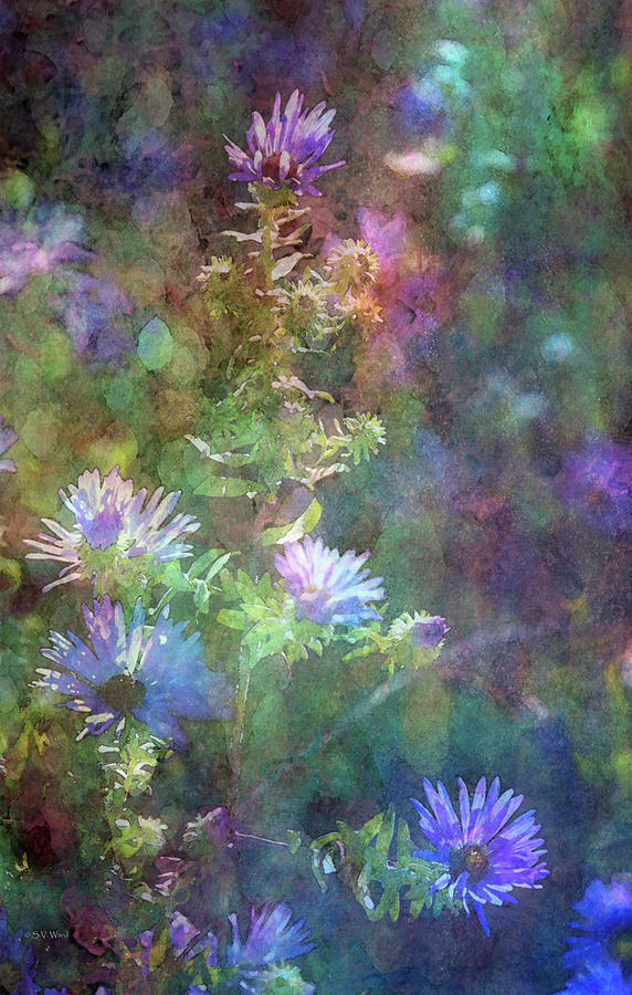Impression Photograph - Aster 5077 Idp_2 by Steven Ward