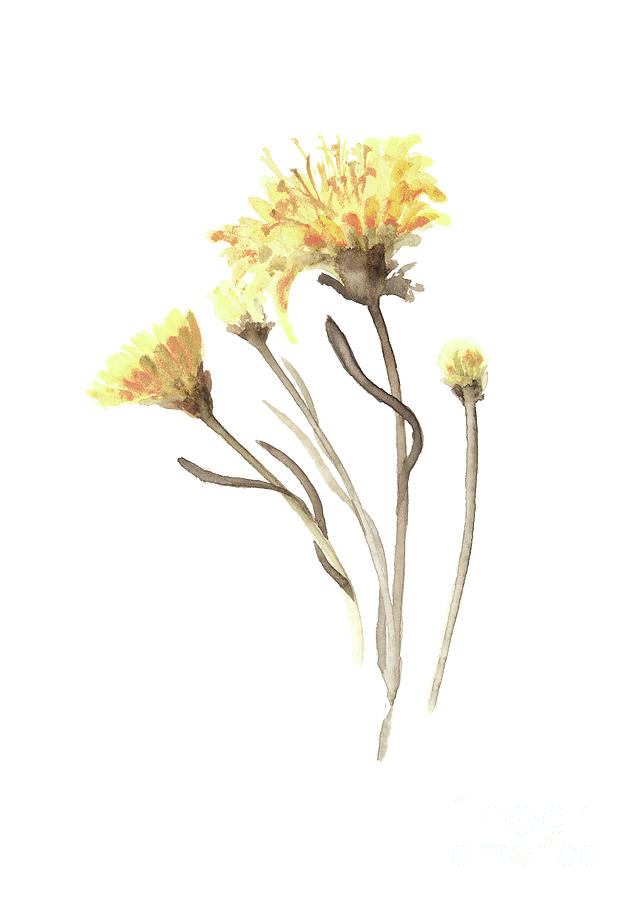 Aster yellow flower abstract art print asters watercolor painting painting painting aster yellow flower abstract art print asters watercolor painting floral minimalist mightylinksfo